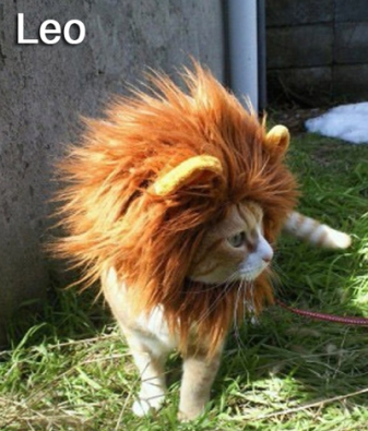 Image result for leo kitty